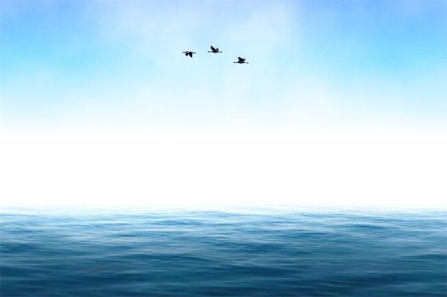 SVG大海海鸥飞过场景特效